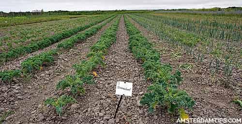 novalishoeve farm texel