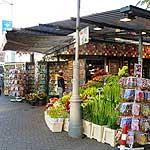 free flower market amsterdam