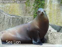 sea lion artis
