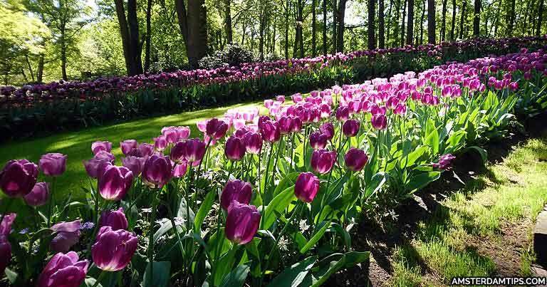 Keukenhof Spring Flower Garden Park In The Netherlands