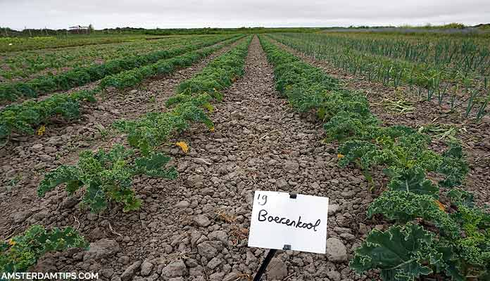 novalishoeve organic farm texel