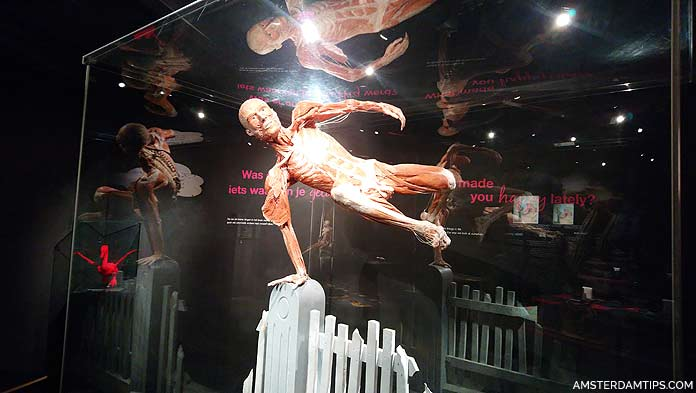 body worlds amsterdam man