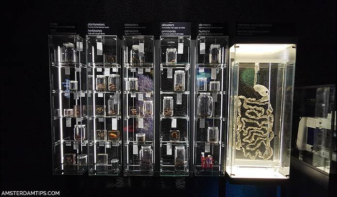 micropia museum amsterda digestion exhibit