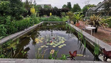 zuidas botanical gardens in amsterdam